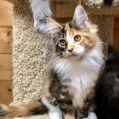 Kitten 1
