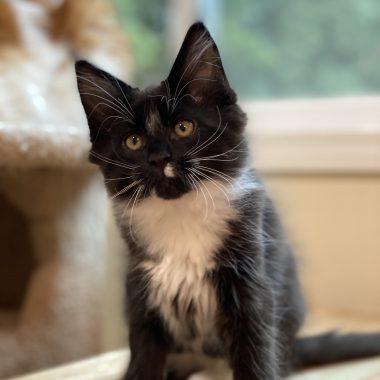 March 2020 kittens